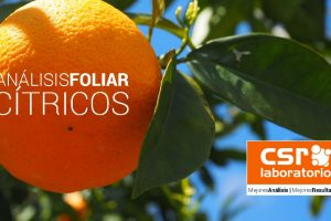 Análisis Foliar Naranjo, Mandarina, Limonero