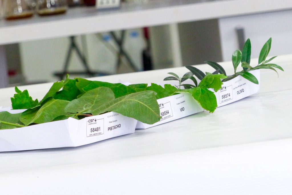 Los análisis foliares determinar el estado de salud de la planta en un momento del tiempo.