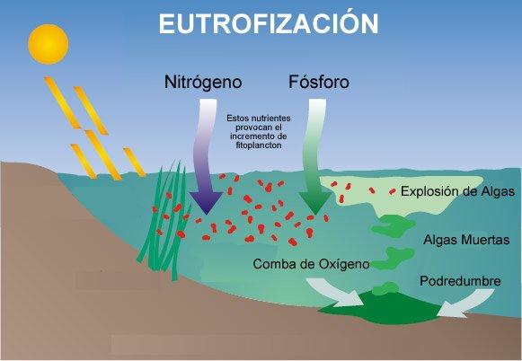 Eutrofización de Lagos y Balsas de Riego
