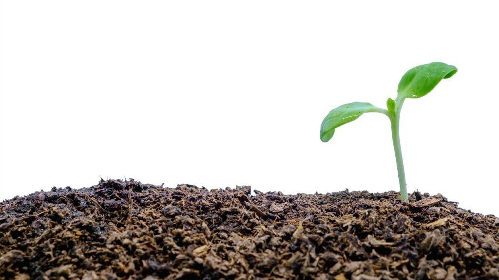 Planta con compost