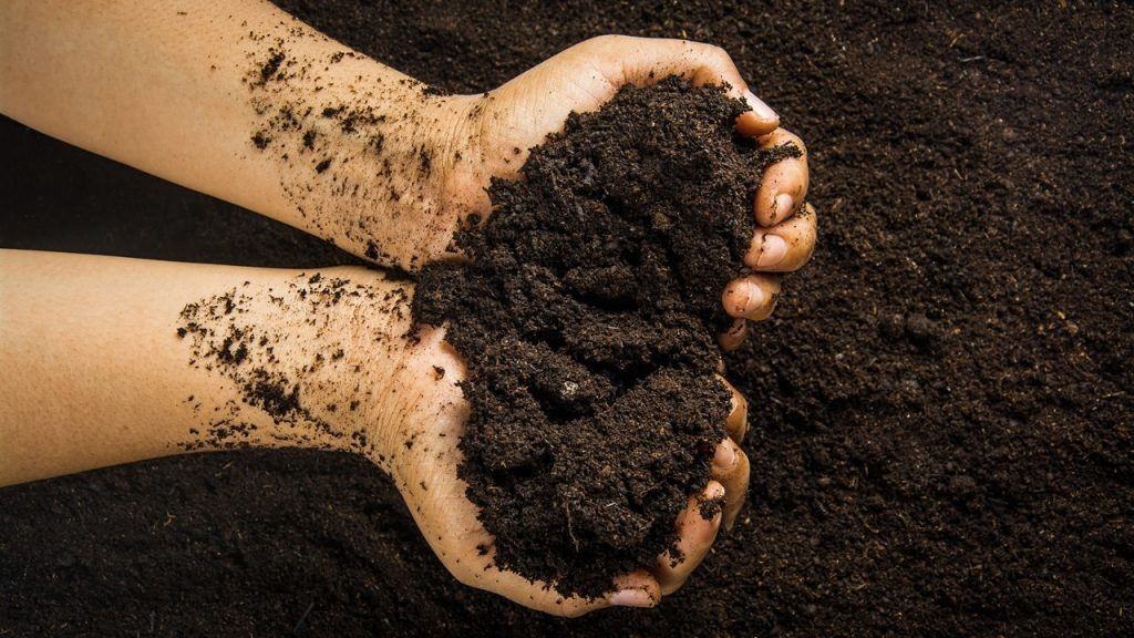 Compost de calidad