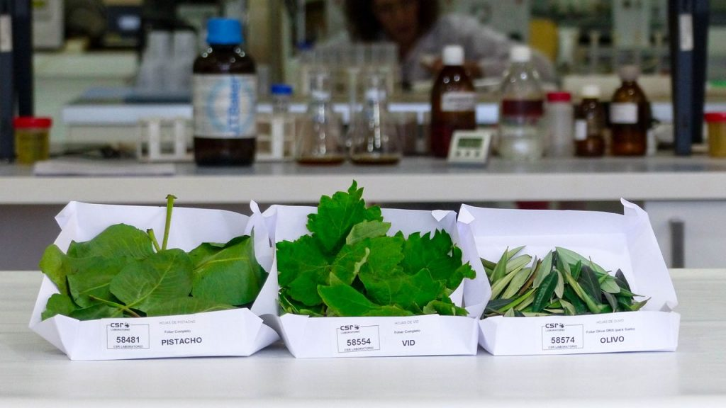 Hojas preparadas para ser analizadas en el laboratorio